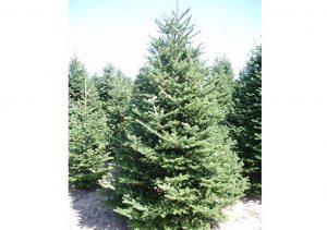 ca75ec5ef Buy Christmas Tree Online