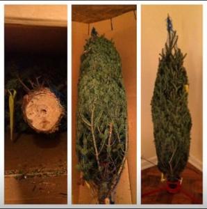 Christmas Tree Farm Arizona.Mail Order Christmas Trees Online