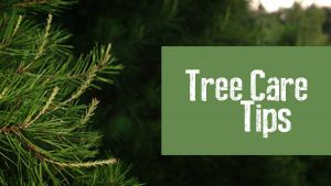 when you start with a fresh real christmas tree from browns tree farm and follow the tips above we guarantee your christmas tree will remain fresh